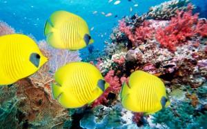 TropicalFish-01